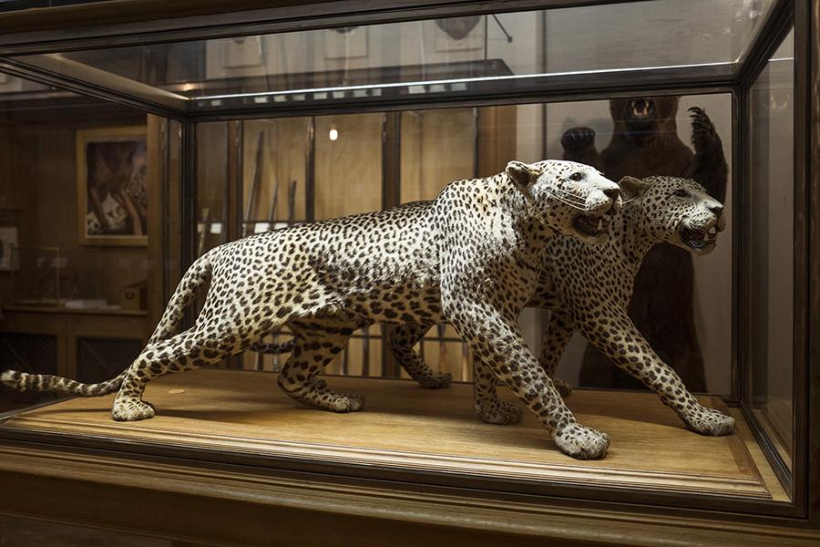 musee-de-la-chasse-10